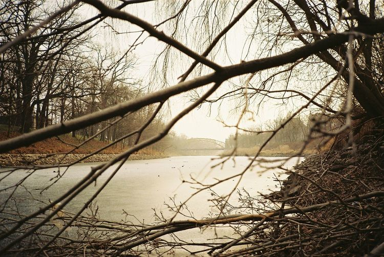Celebrating 300th photo with fresh scan from canon sure shot supreme / top shot on Kodak colorplus200 300th Photo! 35mm Film Analogue Photography Bridgetown Composition Frozen Bare Tree Beauty In Nature Branch Bridge Brown Day Ecru Lake Nature No People Oder Outdoors Scenics Sky Tranquil Scene Tranquility Tree Water Winter