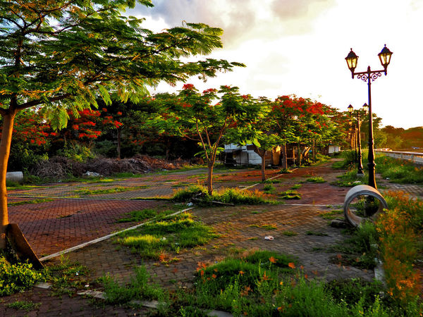 Vacant lot with trees in bloom Flowers, Nature And Beauty Grass Lamp Posts Outdoors Photograpghy  Street Light Tranquility Traveling Trees Twilight Vacant Lot