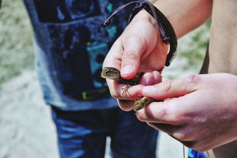 Close-up midsection of man holding lizard by friend standing on field