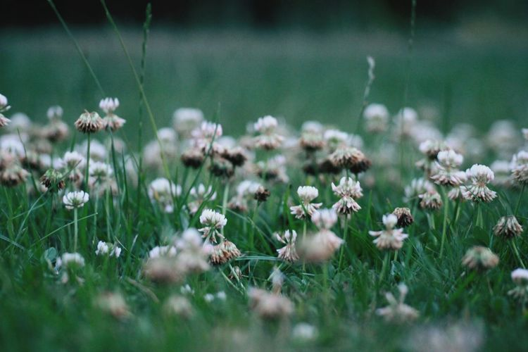 Close-up of flowering plants on field
