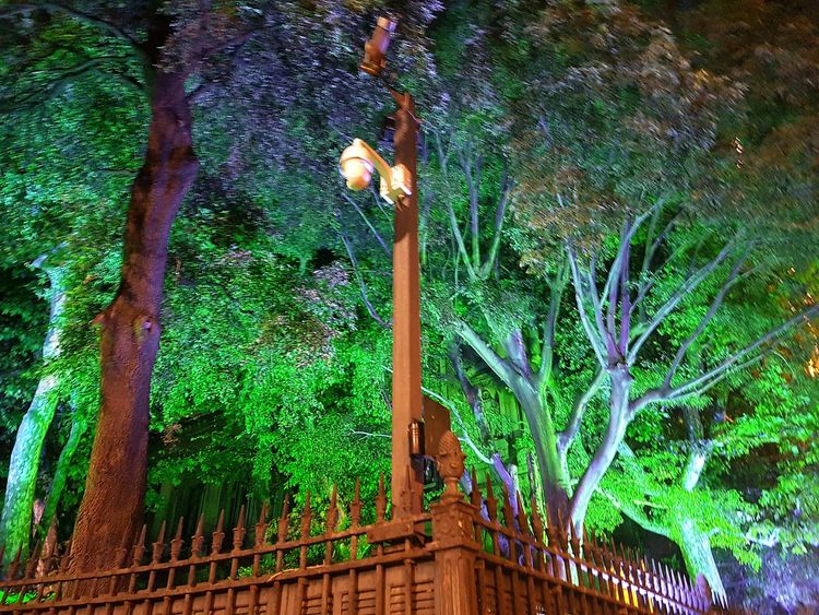Tree Tree Art Feuilles Branches Colours Colors Light In The Night Light Camera Marseille Enjoying Life Hanging Out Taking Photos Check This Out That's Me France French Marseillerebelle Hello World Cheese! Relaxing Hi! Reading EyeEm Best Edits EyeEm Gallery