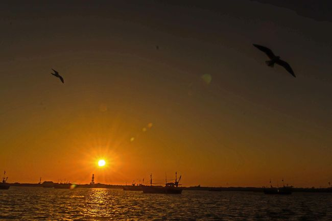 Birds In Flight Sunset Seascape Water Beauty In Nature Ferry Views Another Shot Beautiful Day Bet Dwarka