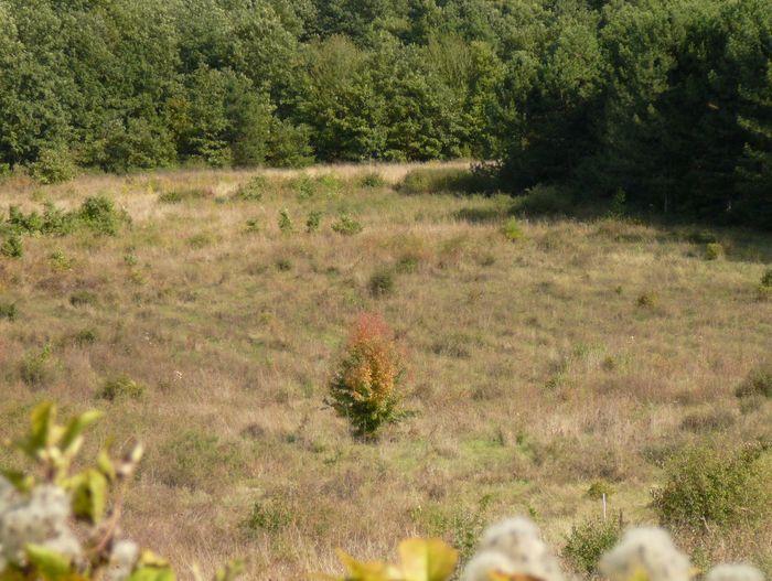 Plant Land