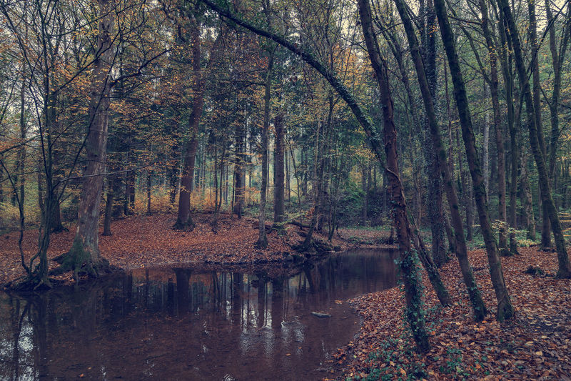 River in the forest in autumn. Art Backgrounds Tree Water Forest Plant Tranquility Land Nature No People Beauty In Nature Lake Reflection Trunk Tree Trunk Tranquil Scene Scenics - Nature Day WoodLand Waterfront Growth Outdoors Change Swamp