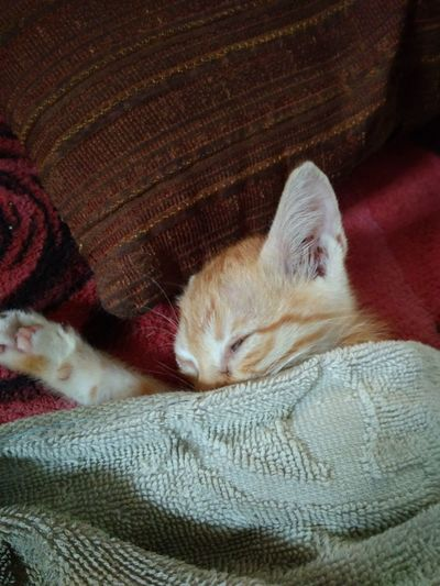 sleep kitten Pets Sleeping Lying Down Relaxation Day Mammal Bed No People Close-up Resting Tired Rest Comfortable Lazy Day Indoors  Animal Themes Kitten