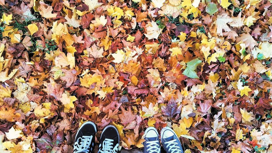 Directly above shot of shoes on autumn leaves