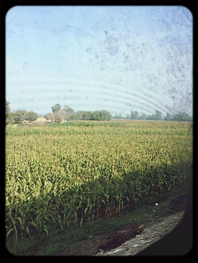 From Train Cairo-Alexandria Way Agriculture Way