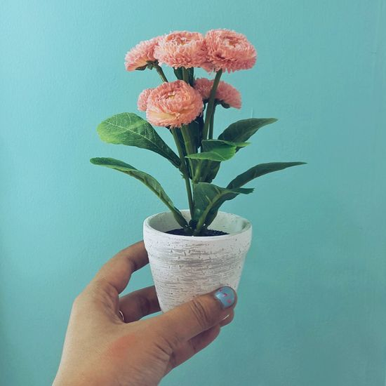 Close-up of hand holding flower pot against wall