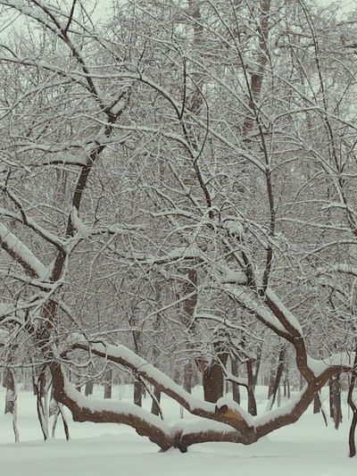 Black And White Snow Trees Wintertime January2016 Belarus Minsk Mobilephotography Nature Photography