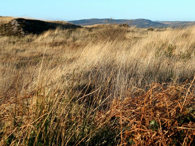 Soon all will be green again Bogland Nature Landscape Growth Scenics Rural Scene Non-urban Scene Plant Dried Grass Sky Beauty In Nature Outdoors Tranquility Day No People Mizen Peninsula West Cork Wildatlanticway Ireland Shades Of Winter