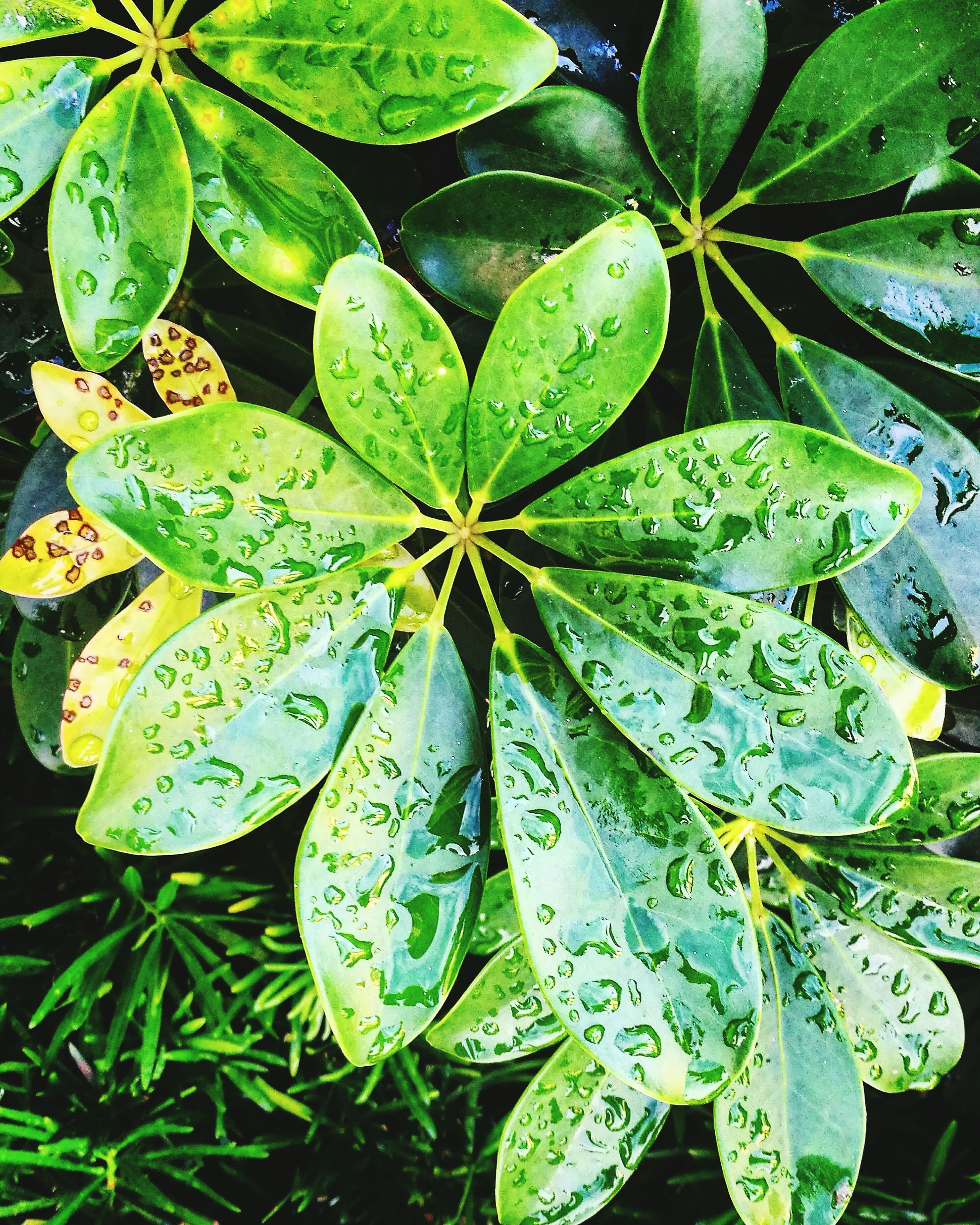 leaf, green color, nature, growth, plant, close-up, no people, beauty in nature, outdoors, water, day, fragility, freshness