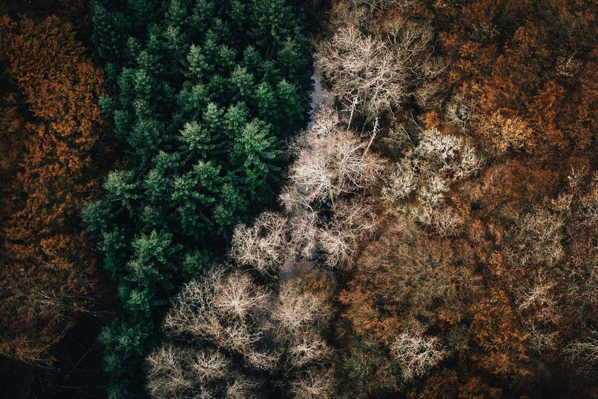 - Three seasons - Nature No People Outdoors Tree Beauty In Nature Pine Pines From Above  Above Season  Seasons EyeEm Best Edits Outdoor EyeEm Best Shots 35mm Nature Textures Growth Day Close-up River Art My Year My View Exploring Style Autumn Winter Flying High