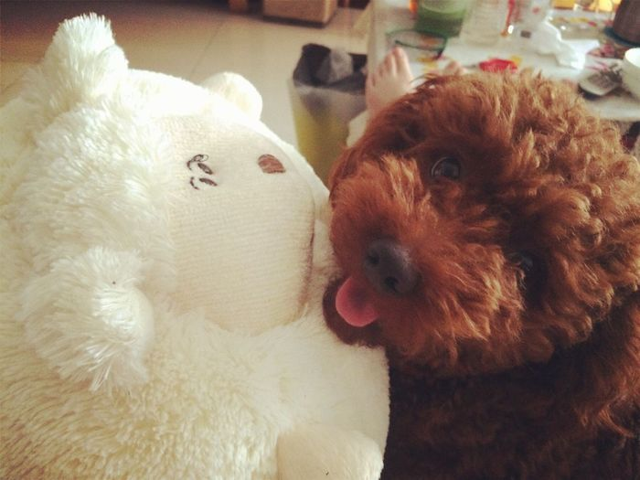 Doggy ♥ My Name Is Baby Doggy And Its Friends I've got a such a big big friend ,Ted.