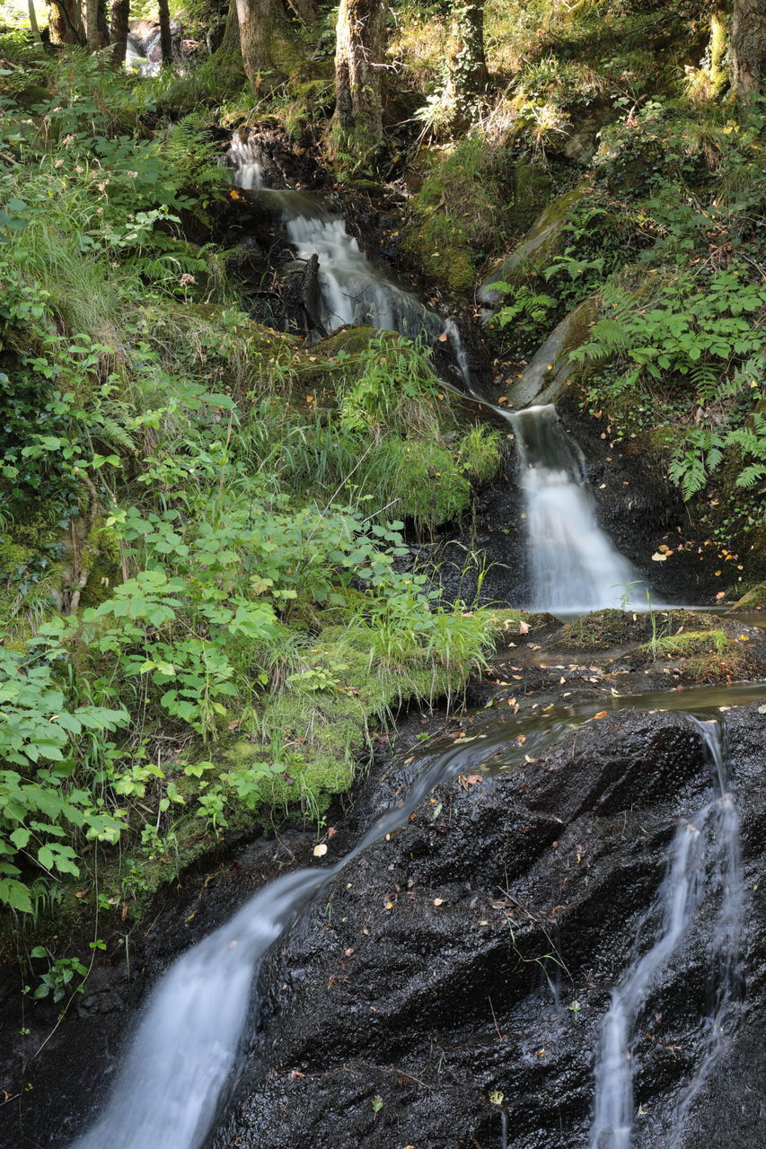 WATER FLOWING THROUGH ROCKS IN FOREST