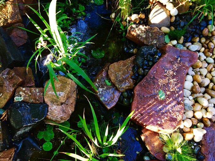 Nature No People Outdoors Water Day Beauty In Nature Leaf Growth Freshness Close-up Garden Photography Nature High Angle View Rock - Object Leaves Tranquility Flagstones Green Green Green!  Green Green Color