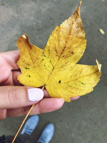 Iphoneonly The Week on EyeEm EyeEm Selects Human Body Part Human Hand Hand Holding One Person Yellow Autumn Real People Personal Perspective Body Part Plant Part Leaf Finger Human Finger Lifestyles Unrecognizable Person High Angle View Outdoors
