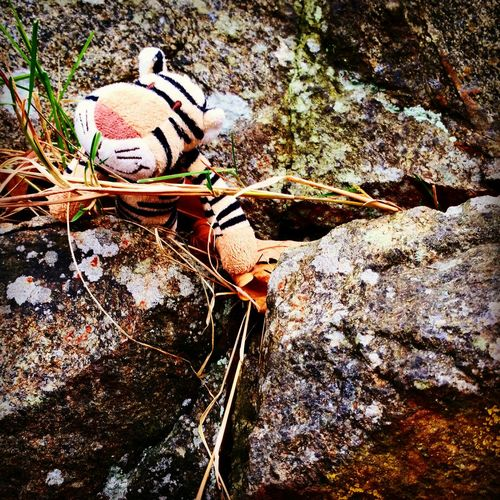 Climbing Tiger Doll Where Are You? Help Me Find My Owner Toy