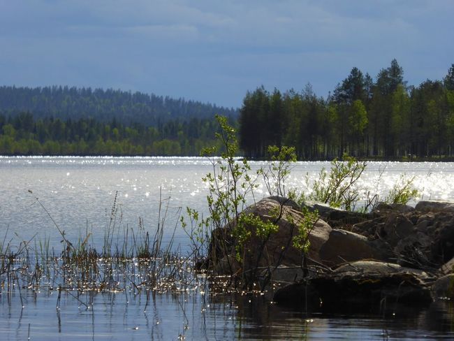 Arctic Light Summer Vibes Ilovenature Lapland, Finland Arctic Light Beauty In Nature Outdoors Nature Landscape No People Naturephotography Tranquil Scene Rovaniemi, Finland 💙 Amazing Day Iloveolddoors 💜life Is Good Lake Lapland, Finland Sunlight Nature Arctic Summer Water