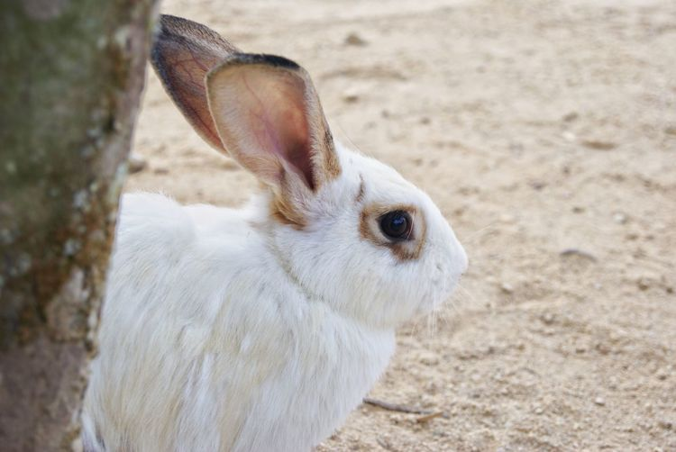 Cute white rabbit One Animal Animal Themes Mammal Looking At Camera Animal Wildlife Nature Outdoors Animals In The Wild No People Close-up Domestic Animals Beauty In Nature Rabbit Cute White