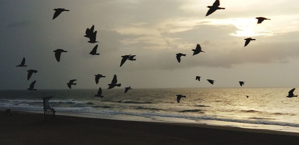 Birds in Flight Note 8 Note 8 Photography Birds Wrightsville Beach Wrightsvillebeach Bird Bird Photography Birds Birds Of EyeEm  Note 8 Note 8 Photography Beach No People NC NC Photographer Nc Photography Wrightsville Beach Wrightsville Beach NC Wrightsville Life Birds Ocean Oceanfront Beach Wave Waves