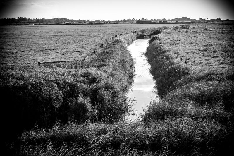 North Norfolk scenes near Thornham, east of Hunstanton and north of Docking. Channel Agriculture Beauty In Nature Day Drainage Environment Field Grass Growth Landscape Managed Landscap Nature No People Outdoors Rural Scene Scenics Sky Tranquil Scene Tranquility Tree Water