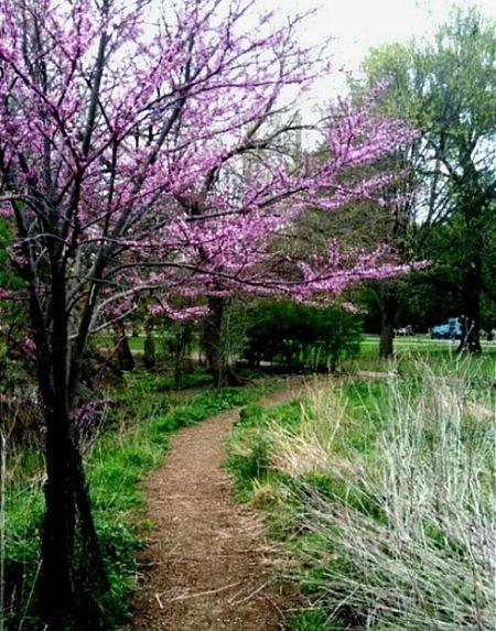 North pond Trees Springtime