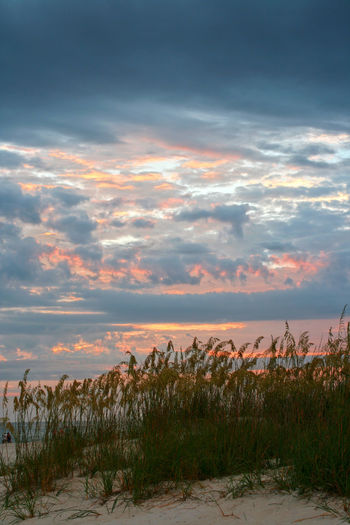Horizon Over Water Landscape Nature No People Outdoors Saint Petersburg Florida Scenics Sea Oats Sky Sunset Tampa Bay Tranquil Scene