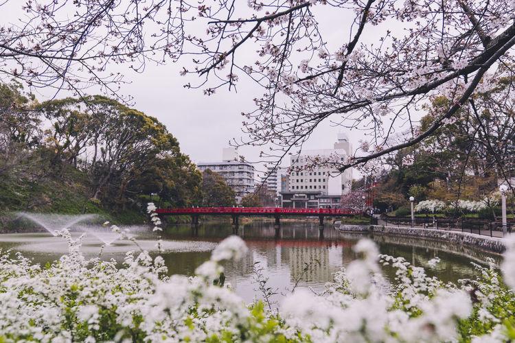 Bridge over lake in city