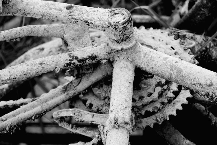 Trash pulled out of the water Bycicle Dirty Bycicle Part Of A Bycicle Black And White EyeEm Selects Close-up Plastic Environment - LIMEX IMAGINE