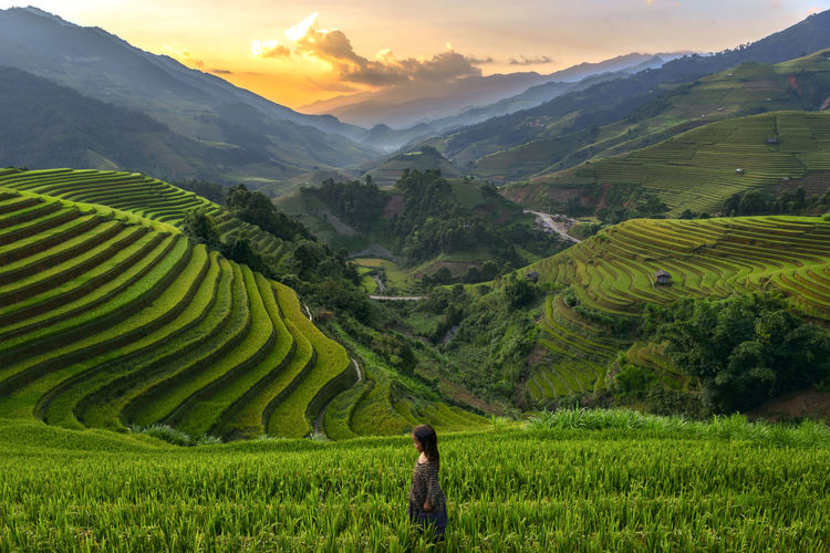 Sunset at Riceteraces Mu cang chai ,Yenbai,Vietnam. Agriculture Beauty In Nature Crop  Day Farm Farmer Field Food Growth Landscape Mountain Nature One Person Outdoors People Plant Rice - Cereal Plant Rice Paddy Scenics Sky Sunset Terraced Field