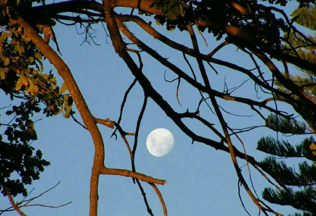 Moon Tree Nature Blue Sky Photography EyeEm Nature Lover Peaceful No Photoshop