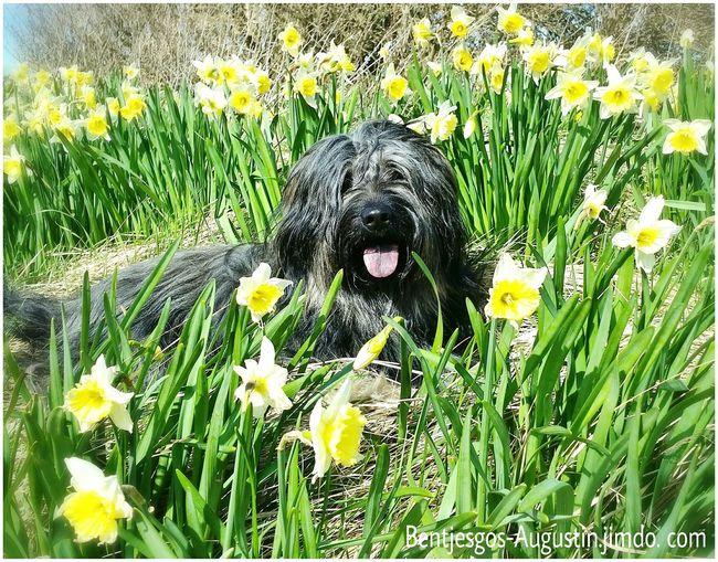 Bentjesgosaugustin Gos D'atura Texel  Holidays Landscape Nature Ilovemydog Dog Walking Mydog I Love My Dog