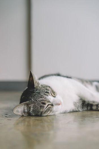 Surface level view of cat sleeping on floor