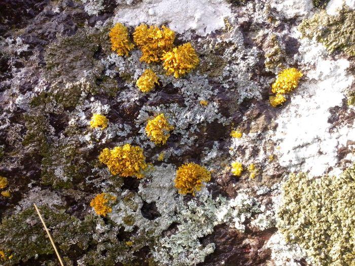 Lichen on the
