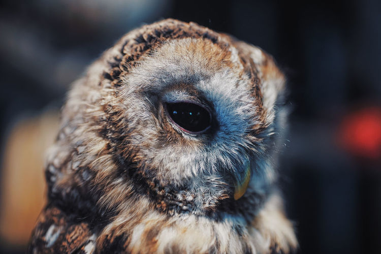 Owls Outdoors
