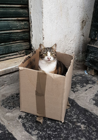 Portrait of cat sitting in box