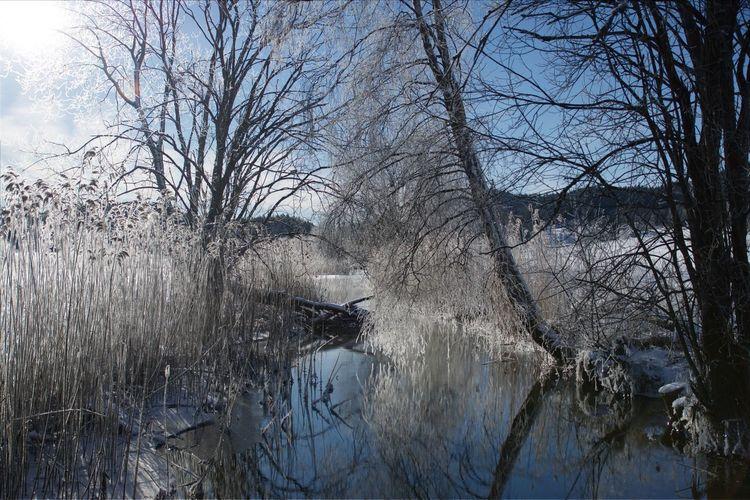 Landscape Winter Frost EyeEm Nature Lover EyeEm Best Shots Unedited Wintertime Norway Snow Showcase March