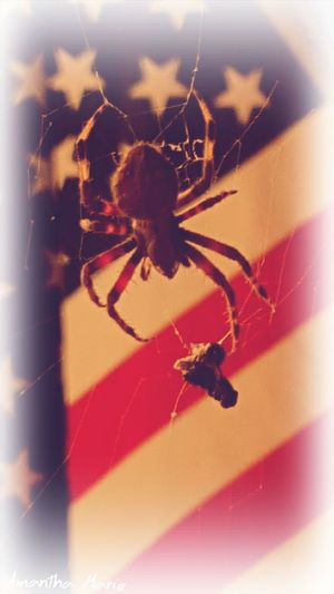 Spider America Freedom Red White And Blue Glory memorial day never forget Freedom Is Not Free Flag Close Up Nature Creepy Crawly