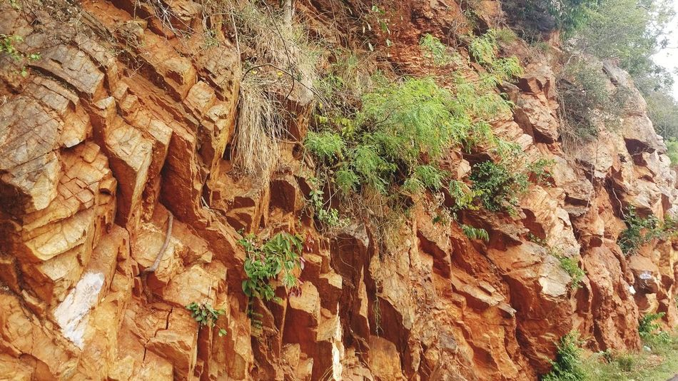 Rocks Orange Rocks Tree Backgrounds Full Frame Textured  Tree Trunk Close-up