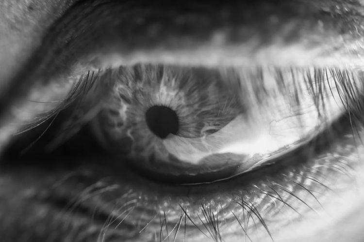 Eyesight Sensory Perception Eyelash Human Eye Human Body Part Extreme Close-up Eye Close-up One Person Body Part Iris - Eye Eyeball Selective Focus Real People Vision Macro Unrecognizable Person Portrait Reflection Eyelid Human Face Beautiful Woman Eyebrow