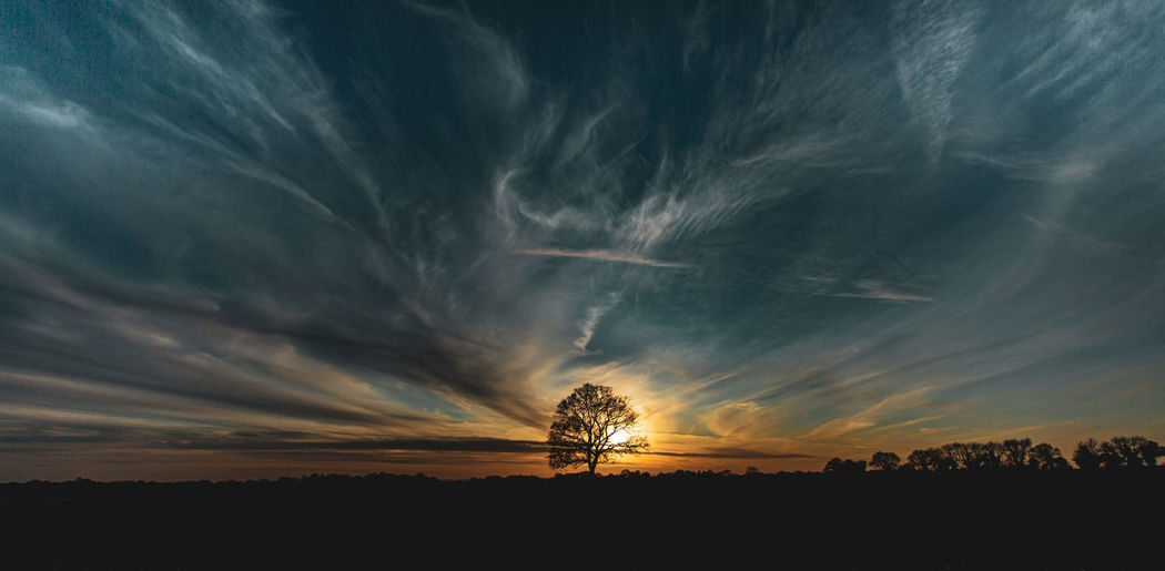 Silhouette trees on field against dramatic sky