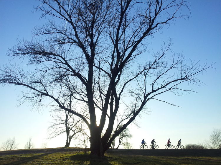 Tree And Ciclysts Tree Nature Sky Sunset Outdoors Clear Sky Landscape Grass Day Bike Ciclysts Bicycle Trip Silhouette Montainbike Four Winter