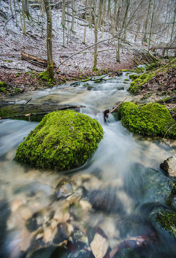Calm Calmness Mossy Nature Stream In The Forest Stream In Woods Cold Cold Temperature Forest Longtimeexposure Moos Moss Mossy Stone No People Non-urban Scene Power In Nature Stream Stream - Flowing Water Water