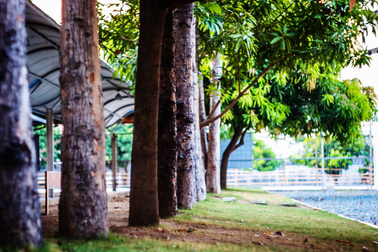 Beauty In Nature Day EyeEm Nature Lover Eyeem Philippines Focus On Foreground Grass Green Green Color Growing Growth Landscape Nature No People Outdoors Park Plant Scenics ShootTheDay The Great Outdoors - 2016 EyeEm Awards The Week Of Eyeem TheWeekOnEyeEM Tranquil Scene Tranquility Tree Tree Trunk