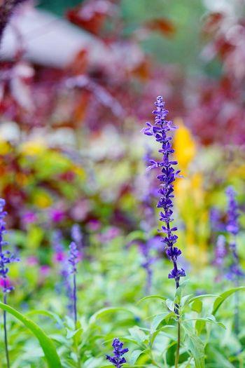 Yangjae citizen's forest park Flower Purple