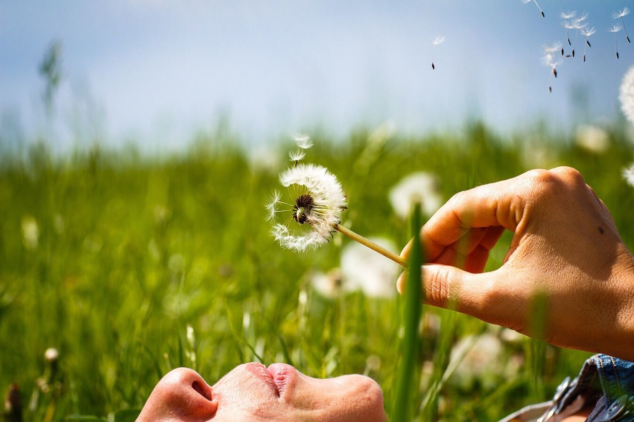 human hand, human body part, dandelion, flower, nature, one person, human finger, holding, real people, grass, field, focus on foreground, growth, beauty in nature, outdoors, fragility, close-up, plant, leisure activity, day, men, flower head, sky, freshness, adult, people