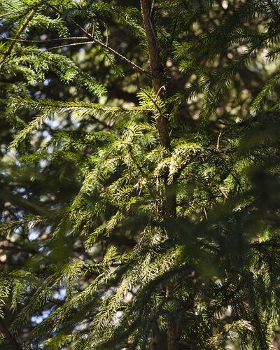 Tree Plant