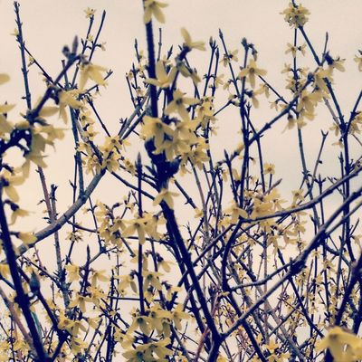 Flowers Nature Branches EyeEm Nature Lover