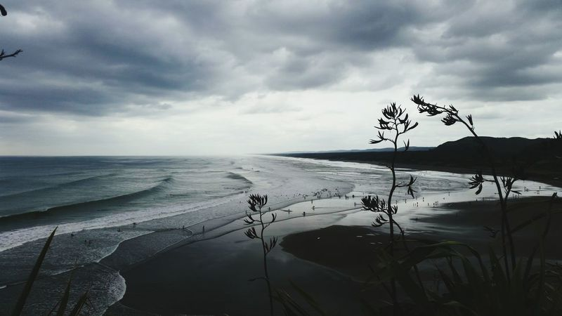 Nature Beach Water Sand Sea Landscape Storm Cloud Outdoors Plant Social Issues No People Cloud - Sky Tree Beauty In Nature Day Sand Dune Sky Thunderstorm muriwai beach Westauckland Muriwai Beach New Zealand Storm Clouds Gathering EyeEmNewHere The Great Outdoors - 2017 EyeEm Awards