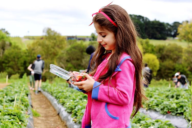 Cute girl holding strawberries in container white standing in field